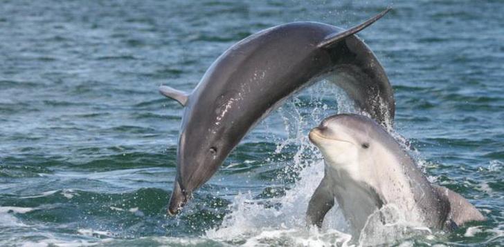 delfiny-1