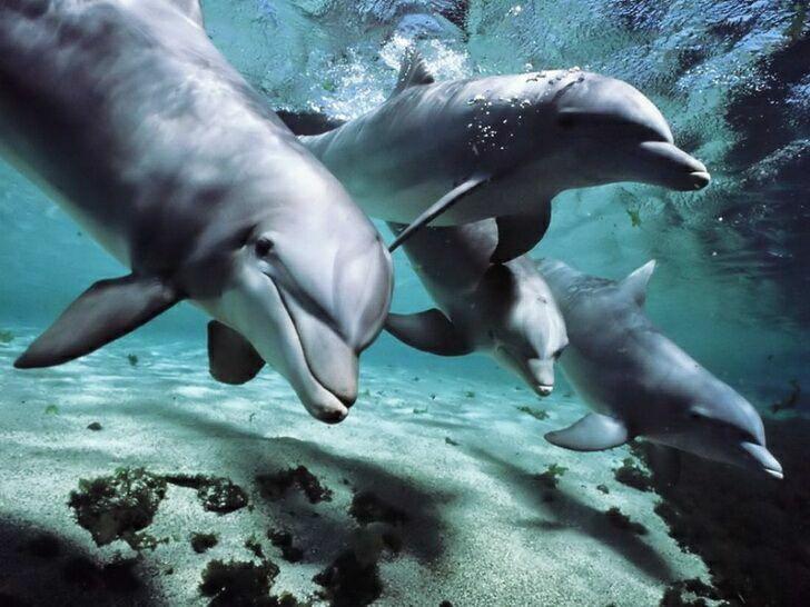 delfiny-2