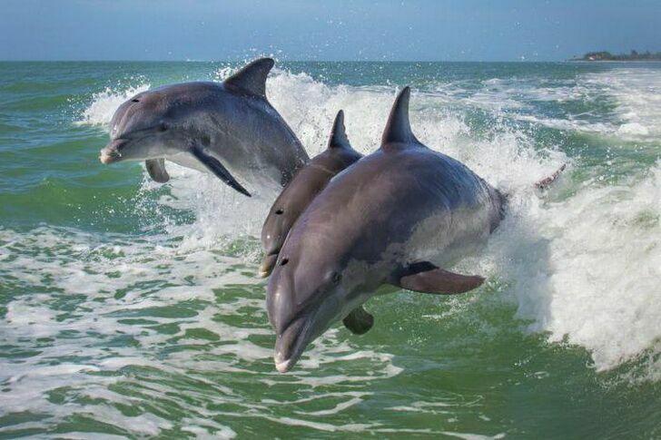 delfiny-3