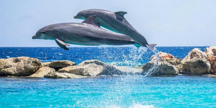 delfiny-4