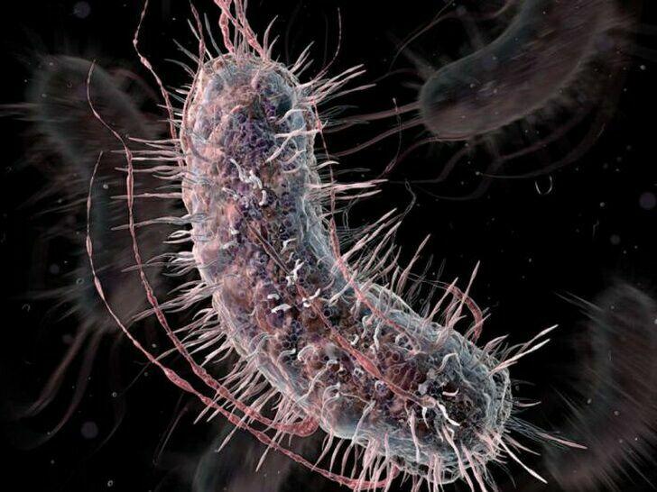 bakteriya-3