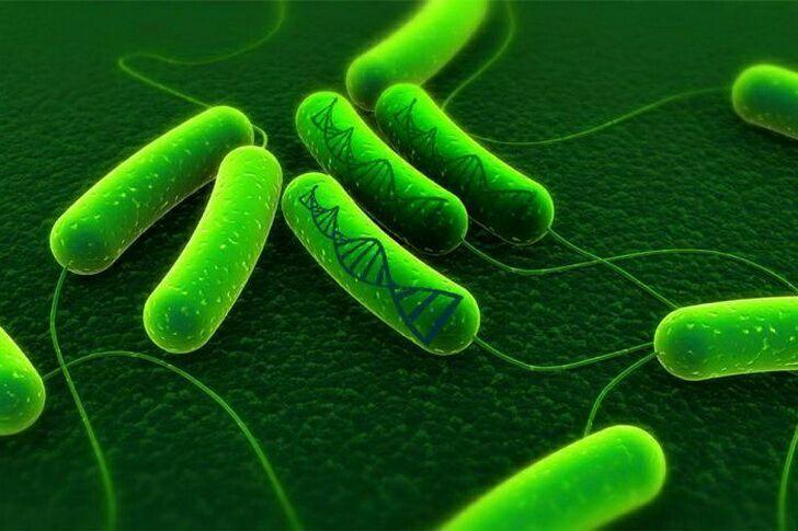 bakteriya-5