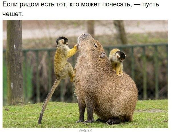 kapibara-2
