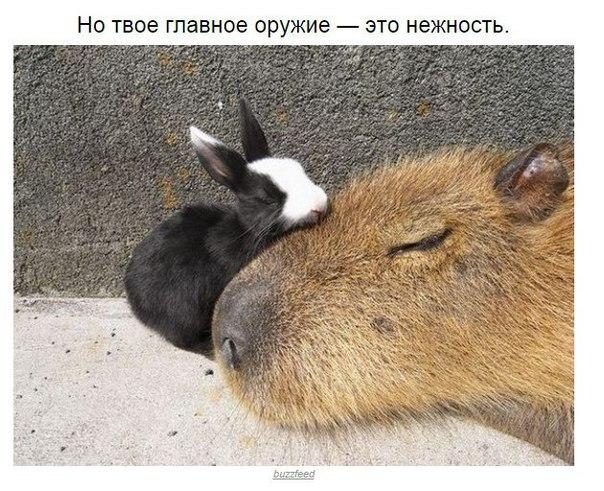kapibara-5