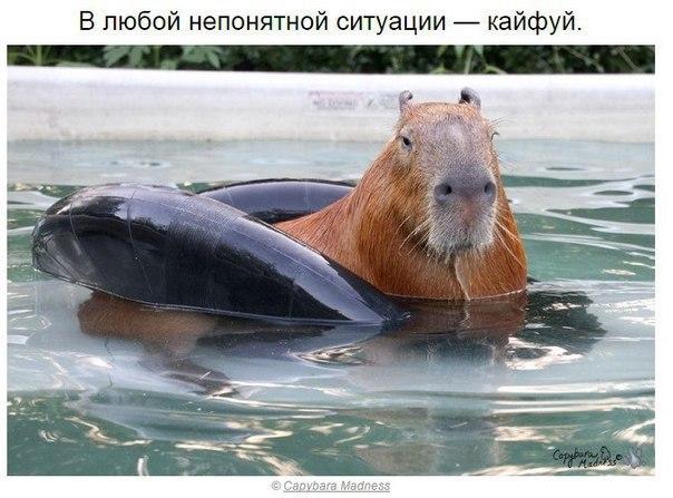 kapibara-6