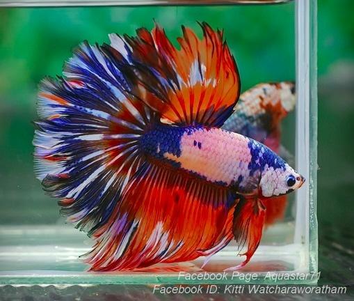 neobychnyj-okras-rybka