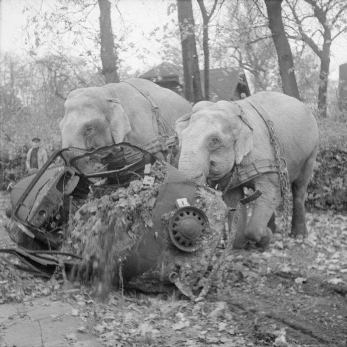 slona-gamburg
