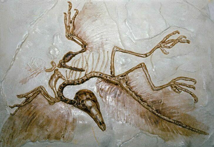 evolyutsiya-2