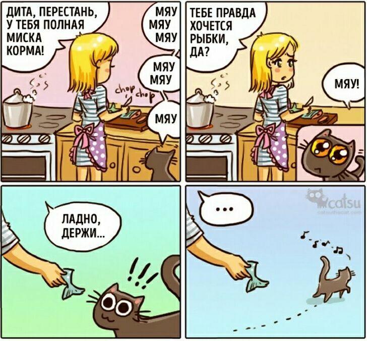 zavelsya-kot-7
