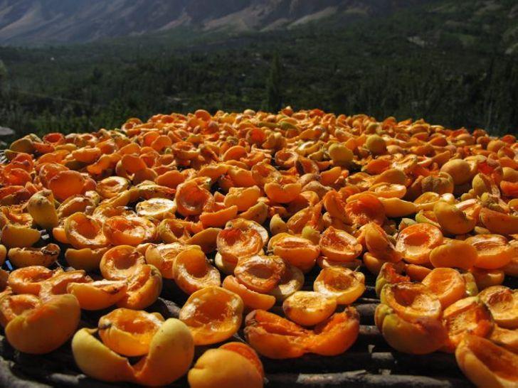 hunza-abrikosy