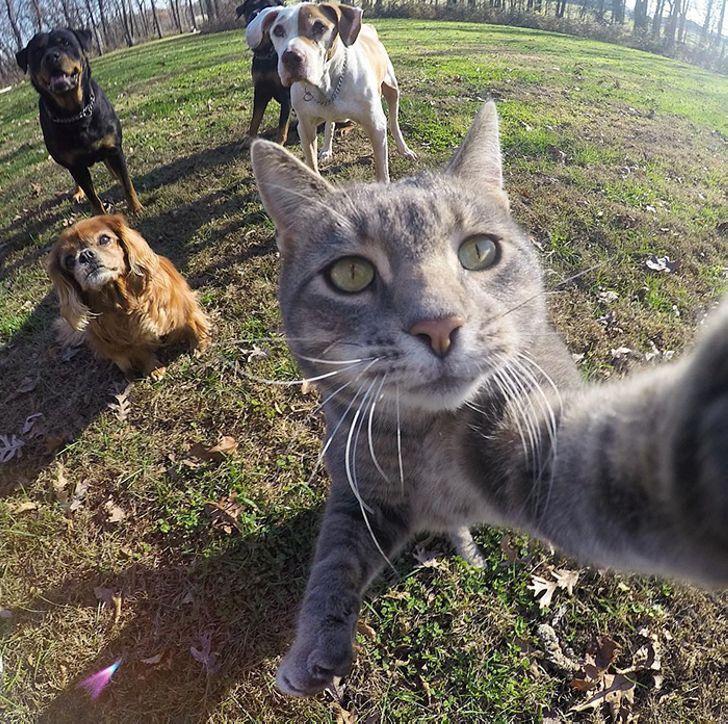 Собачий босс кот Мэнни просто обожает делать селфи