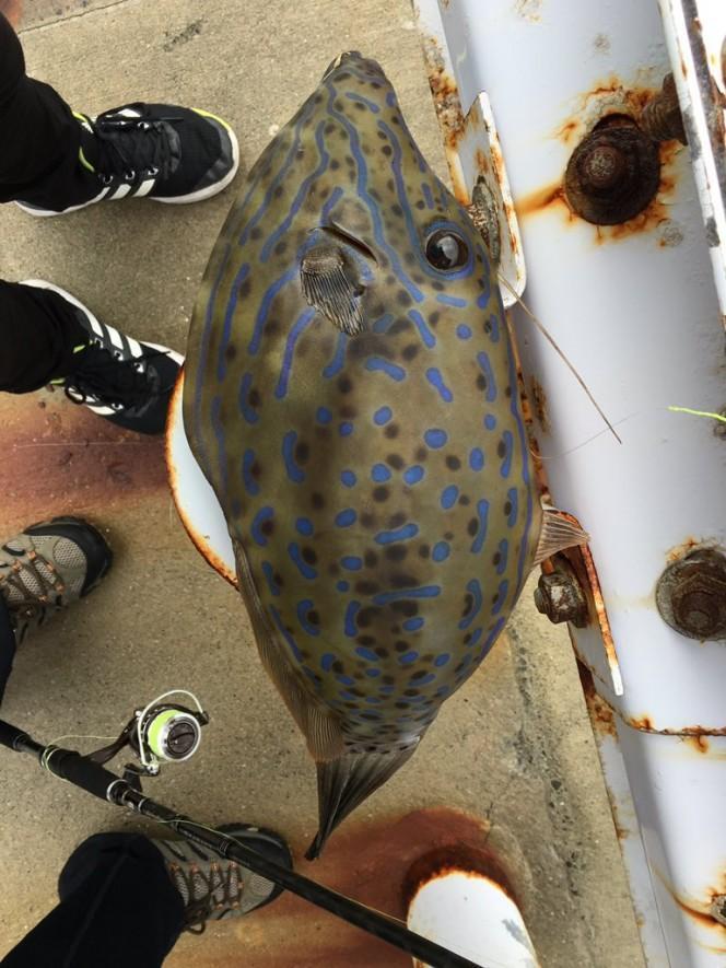 Он поймал рыбу и принес ее домой. К счастью, он выложил фото в Интернет, перед тем, как съесть ее!