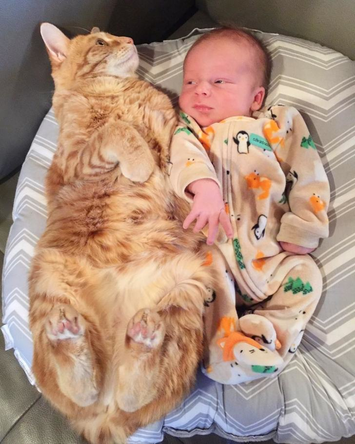 4 собаки и кошка, ухаживающие за новорождённым, растрогали пользователей интернета