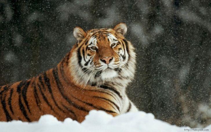 Говорят, что звери больше ценят добро, чем люди. Читаю эту историю и плачу.