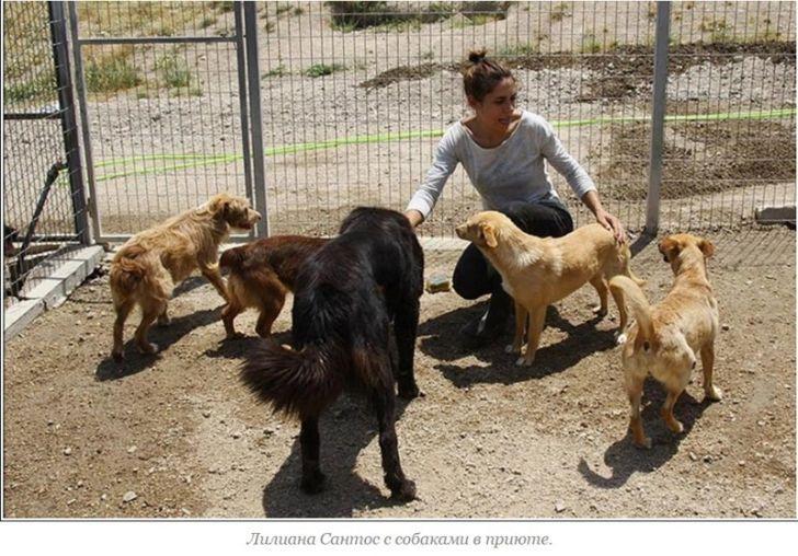 Простой жест щедрости: Как Криштиану Рональду помог выжить 80 собакам
