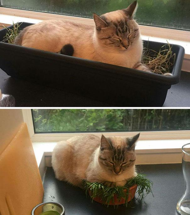 Только кошки могут вот так улечься спать…