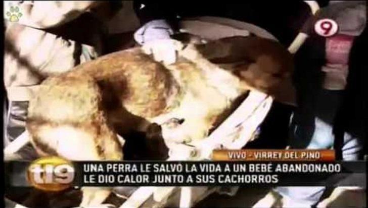 Картинки по запросу Бездомная собака всю ночь согревала младенца, которого «мать» выбросила на мороз