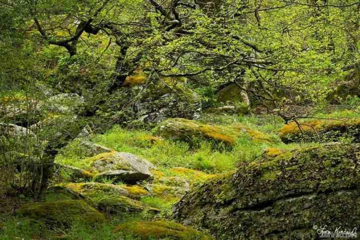Природная красота на снимках Лори Кинкейд