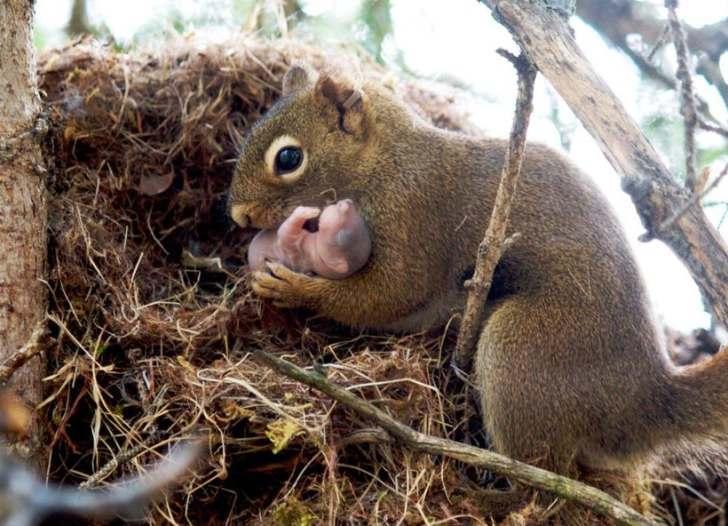 20 семейных фотографий животных с самыми милыми и заботливыми мамами