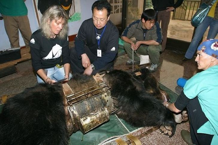Что произошло с медведем, когда с него сняли стальную «рубашку», в которую он был заключён много лет