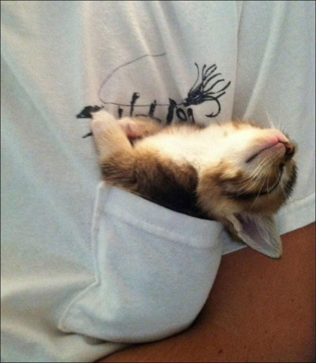 17 неожиданных мест, в которых можно обнаружить вашего кота
