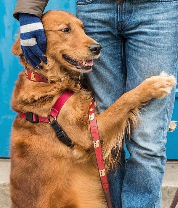 Пес, который любит объятия!