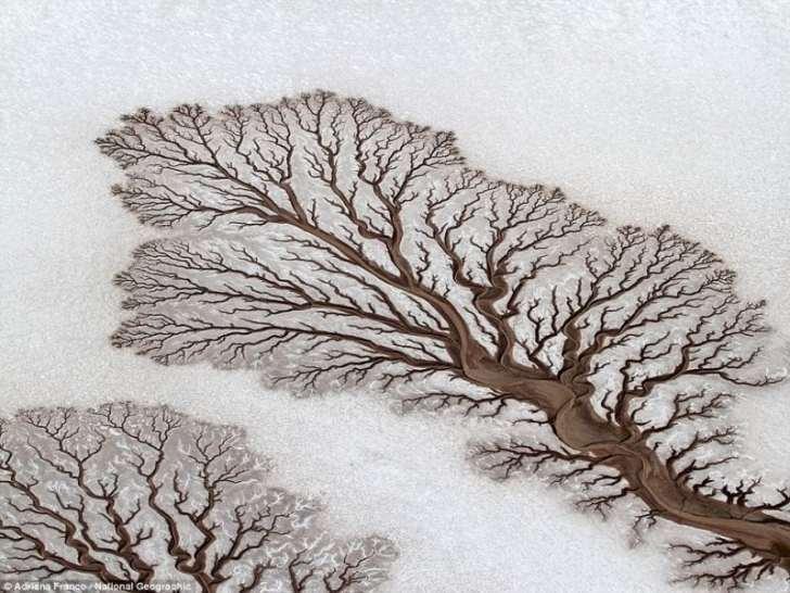 16 оптических иллюзий от матушки-природы. Никакого Фотошопа!