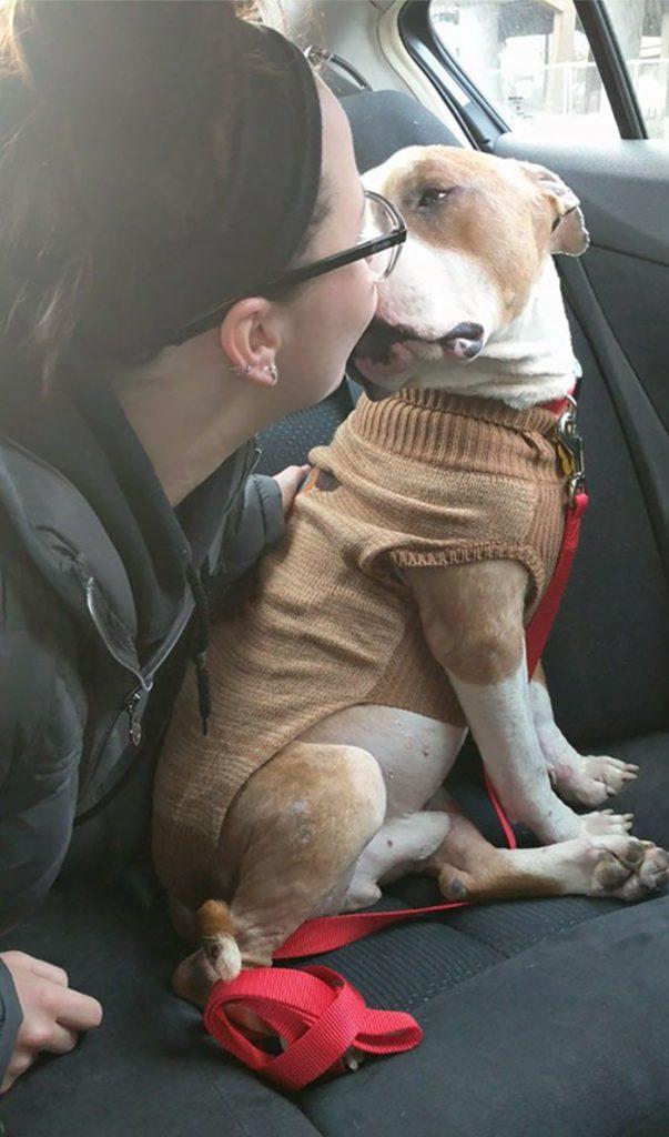 Питбуль, которого забрали из приюта, так благодарен, что не может перестать обниматься!