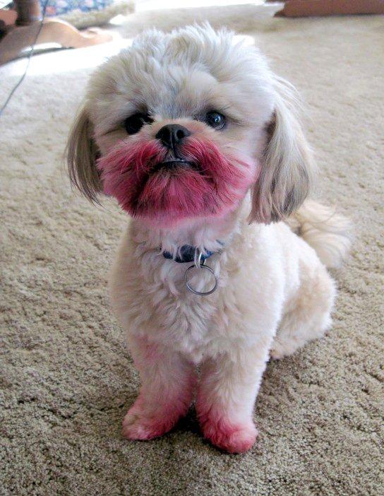 Собака съела косметику своей хозяйки. Это очень очень смешно!