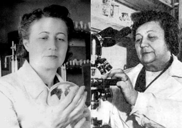 «Мадам Пенициллин»: как советская женщина-микробиолог поборола холеру и нашла универсальный антибиотик