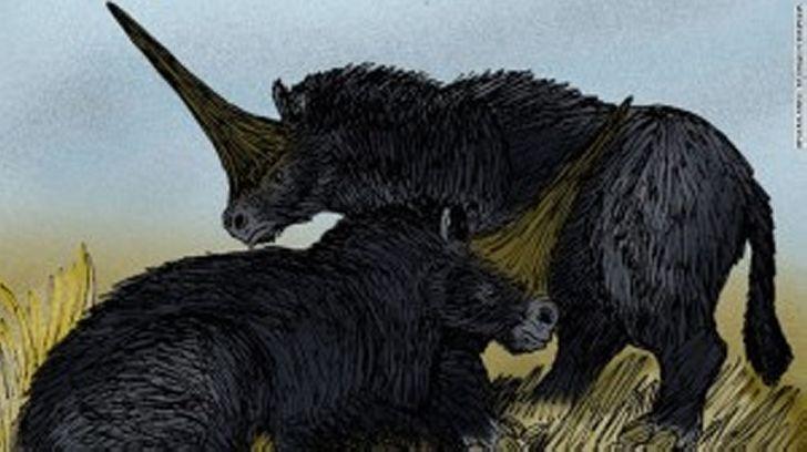 Найдены останки реального «Сибирского единорога»