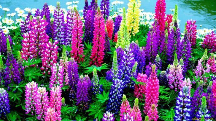 15 красивейших цветов-убийц, опасных для жизни
