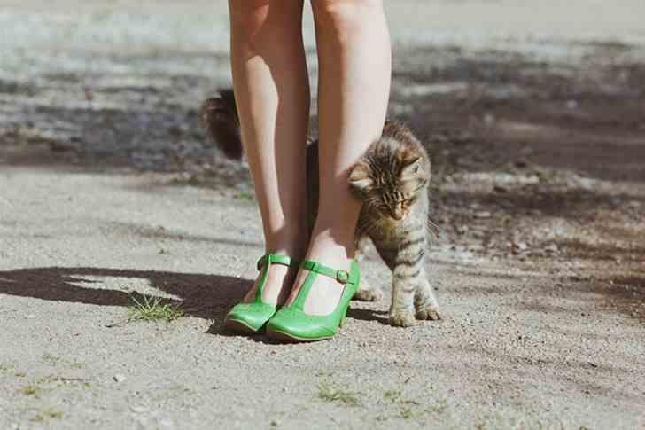 Какие же они удивительные! Интересные факты о кошках