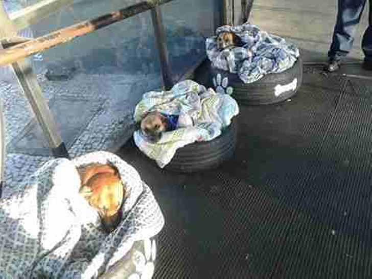 Вокзал для бездомных собак