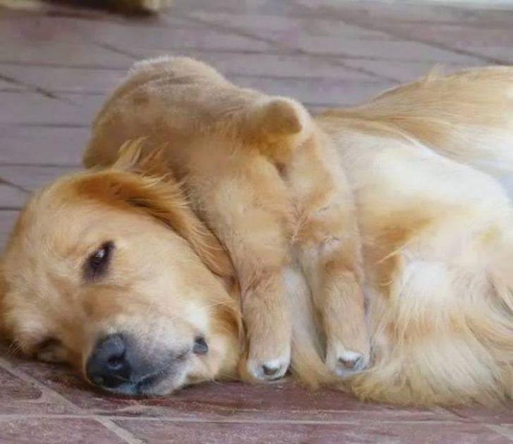 Смешные кошки и собаки, в одночасье познавшие всю «прелесть» материнства