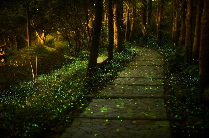 Живой лес Японии и его потрясающие светлячки