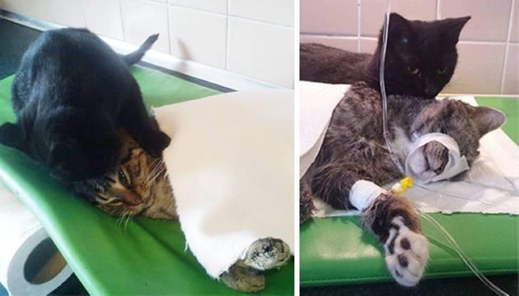 Кошка-медсестра заботится о животных в приюте