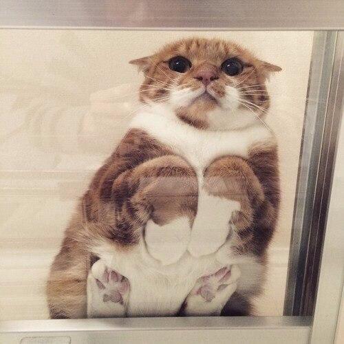 Смешные и забавные котики для хорошего настроения