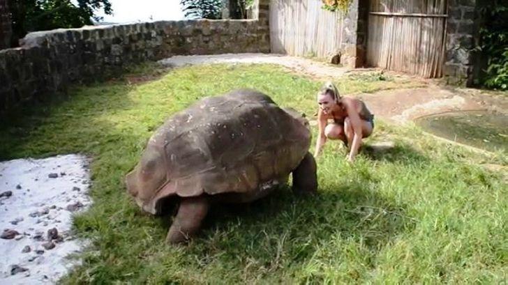 Угадайте, какие из этих 10 животных существуют на самом деле, а какие обманка