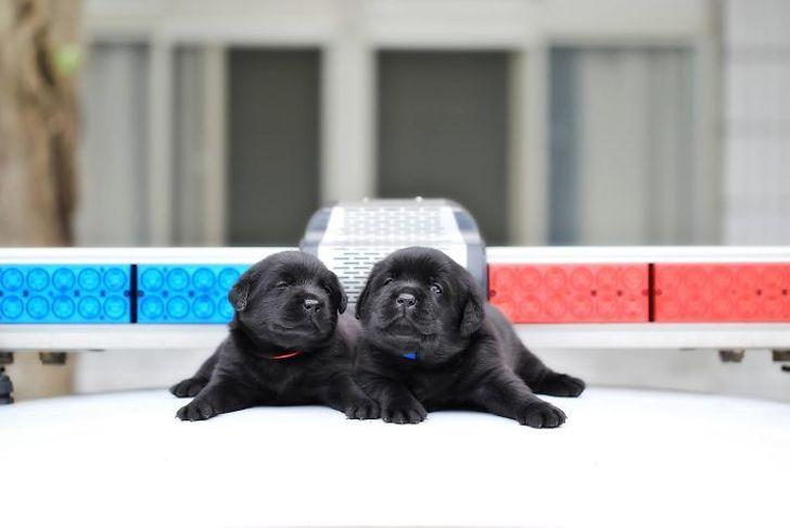 Самые милые полицейские