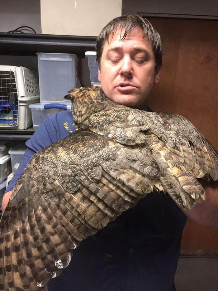 Смотрите, как признательна спасённая от гибели сова