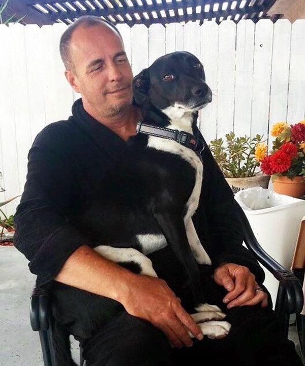 Никогда не зарекайся или Фотографии отцов, бывших противников собаки в доме