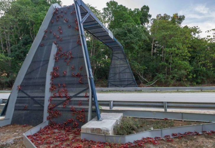 20 потрясающих мостов, которые спасают тысячи жизней ежегодно