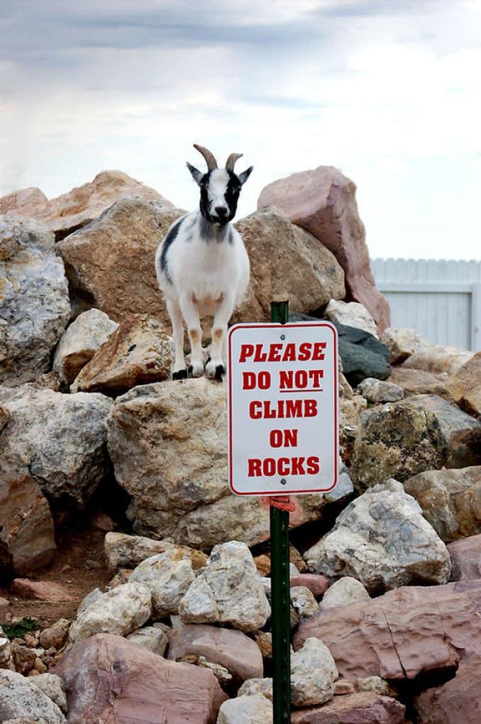 20 смешных животных, которых не заботит мнение окружающих