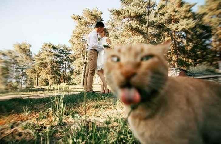 И тут появился кот - 20 уморительных фотографий