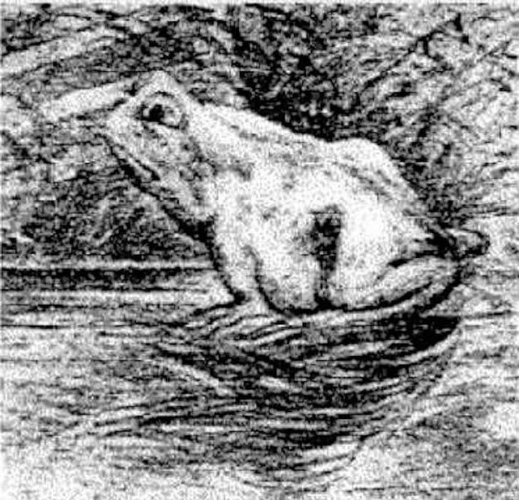 Оптическая иллюзия - Кто же увидит на ней лошадь?