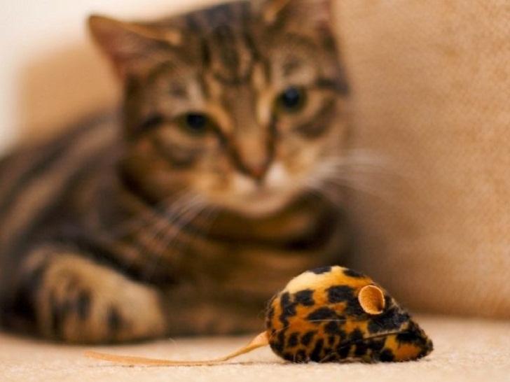 Что сделал кот, понаблюдав за механической мышкой