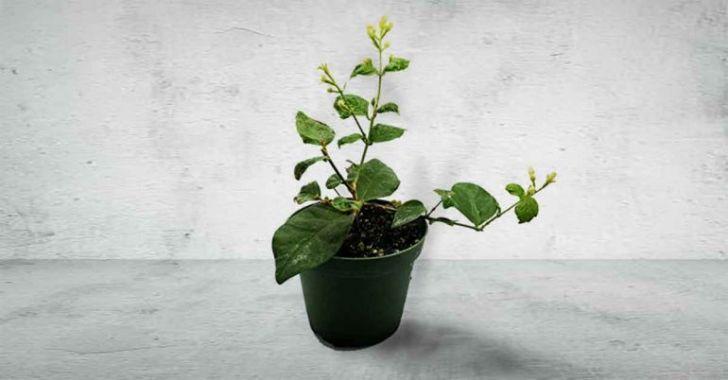 Успокаивающие и расслабляющие комнатные растения