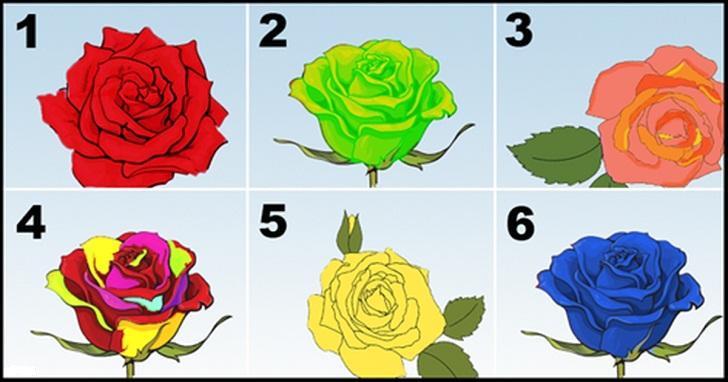 Самая красивая роза, выбранная вами, откроет главные черты вашей личности
