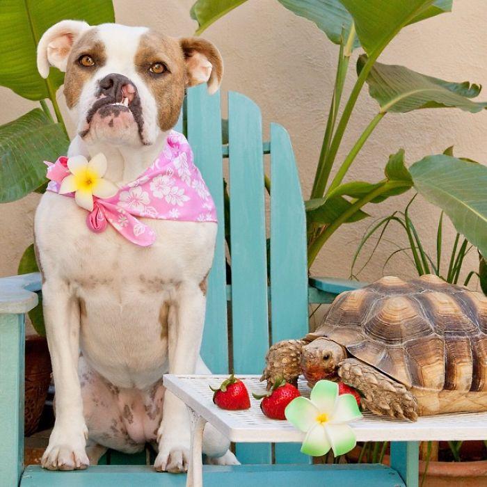 Неожиданная дружба собаки и черепахи